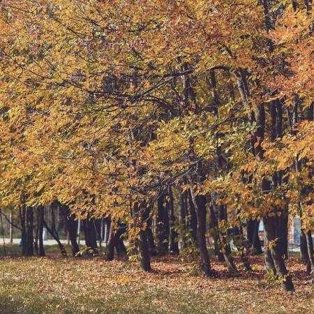 лес на фотке